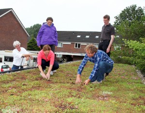 groene daken foto merenwijk 2